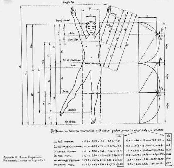 golden ratio in the human body Through this investigation, students investigate the ratios between parts of the human body this leads to the golden ratio students should be encouraged to think of different ways to.